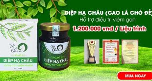 Cao diệp hạ châu hỗ trợ điều trị viêm gan, giải độc gan