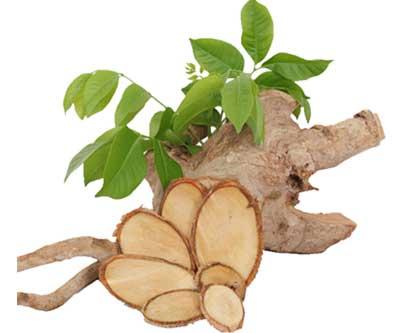 Rễ cây mật nhân